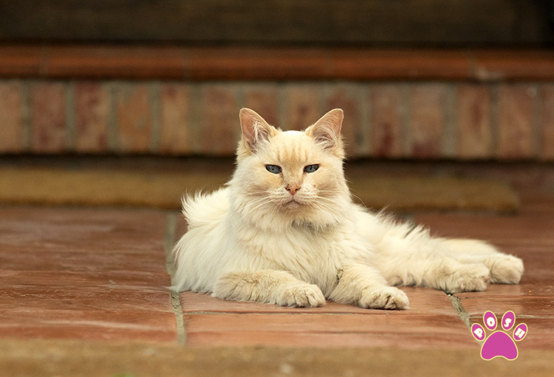 poshpets-cattery-1