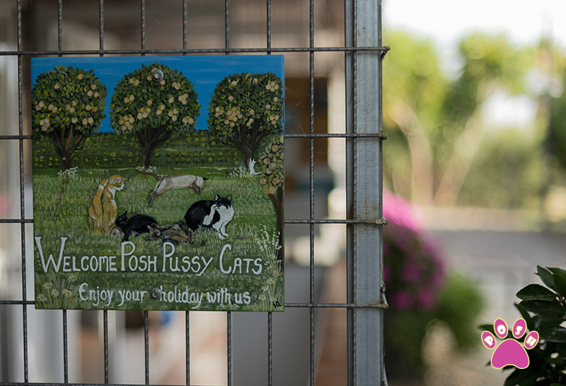 poshpets-cattery-11