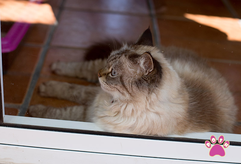 poshpets-cattery-12