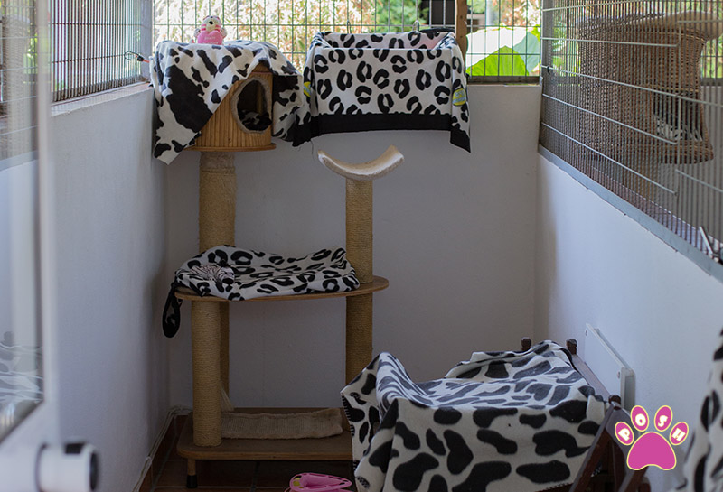 poshpets-cattery-13