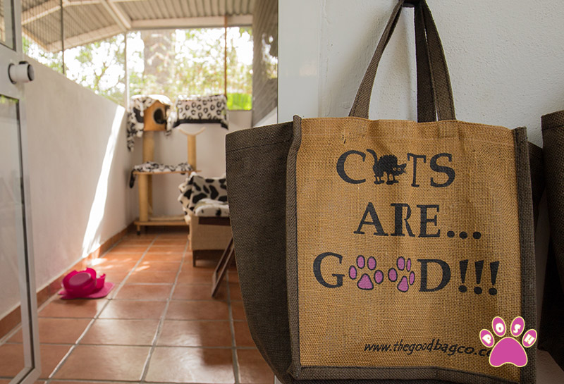 poshpets-cattery-4