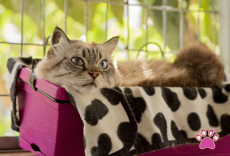 poshpets-cattery-5