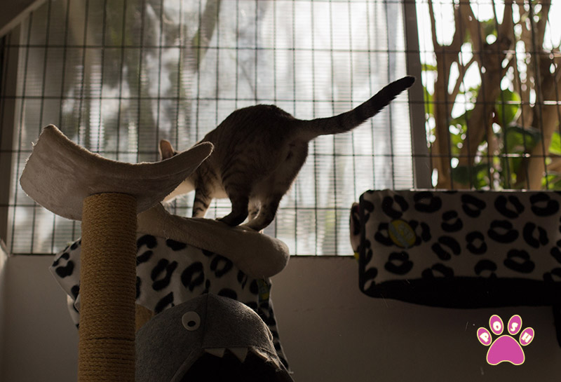 poshpets-cattery-6
