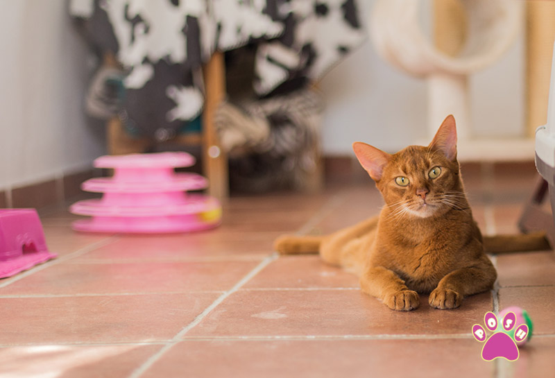 poshpets-cattery-7