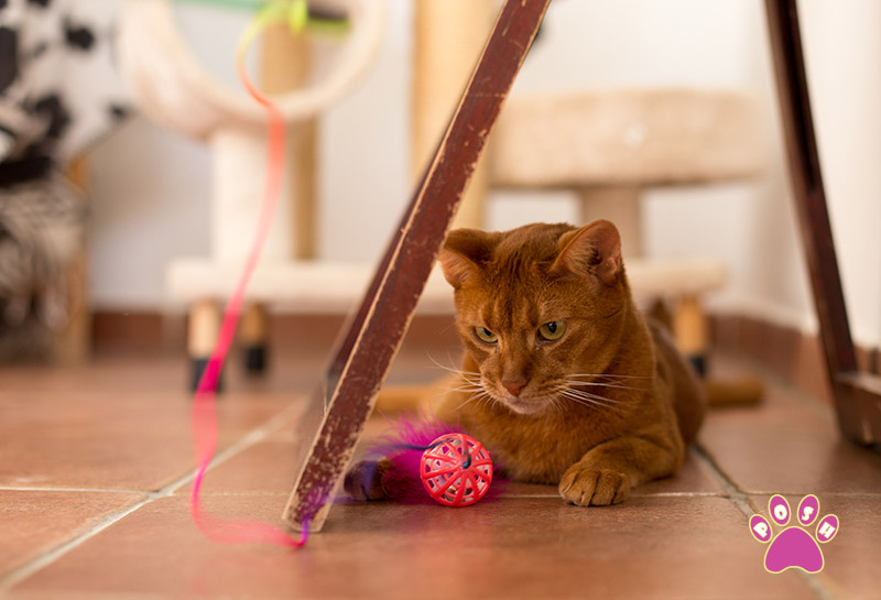 poshpets-cattery-8