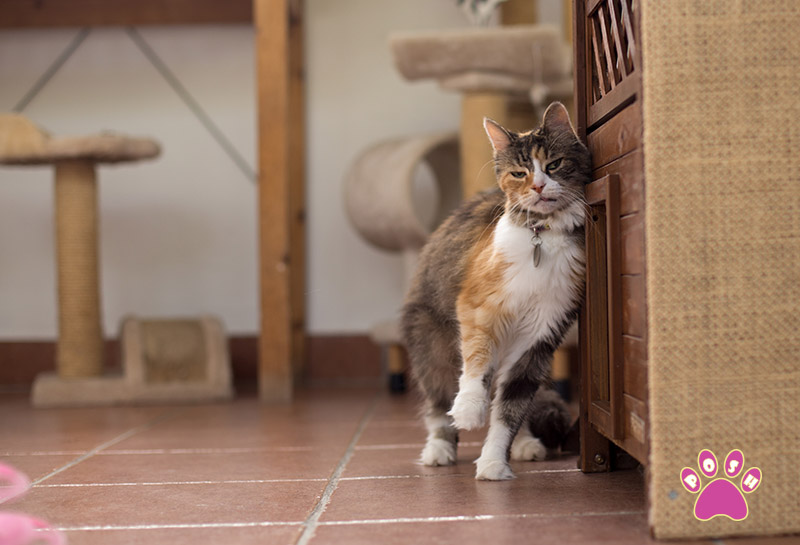 poshpets-cattery-9