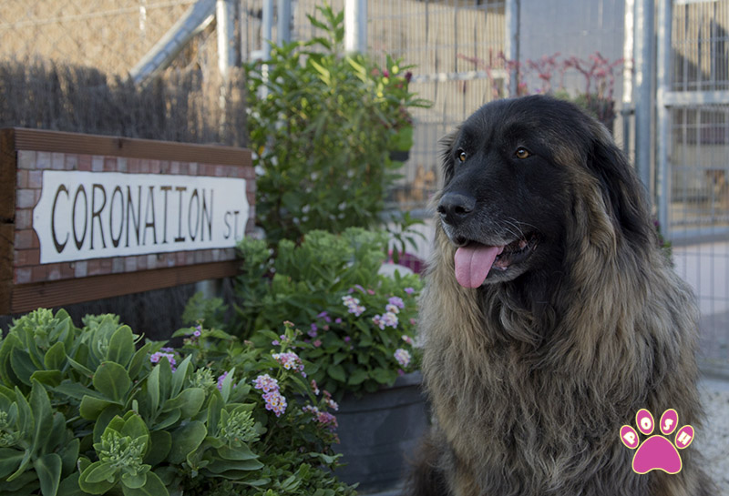 poshpets-doghotel_